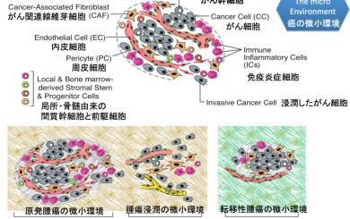 がんの微小環境