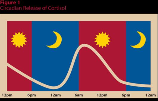 コルチゾールの日内変動